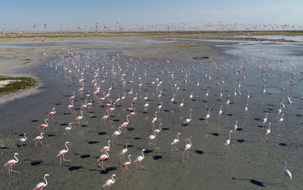 Трагедія в Туреччині: тисячі дитинчат фламінго загинули на озері через посуху (ФОТО)