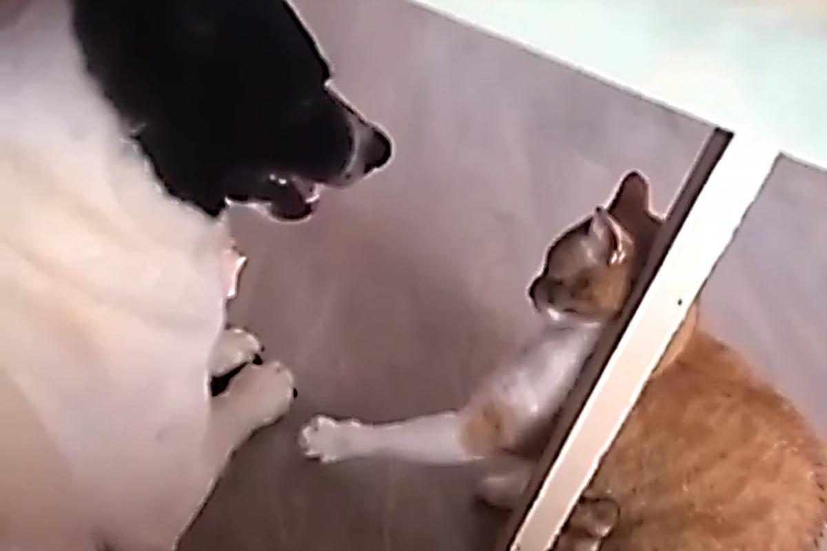 Не надо картинки с котиками