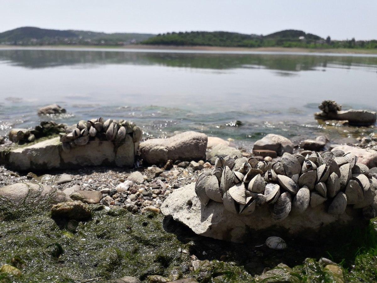В оккупированном Крыму из-за отсутствия воды гибнет до 80% урожая