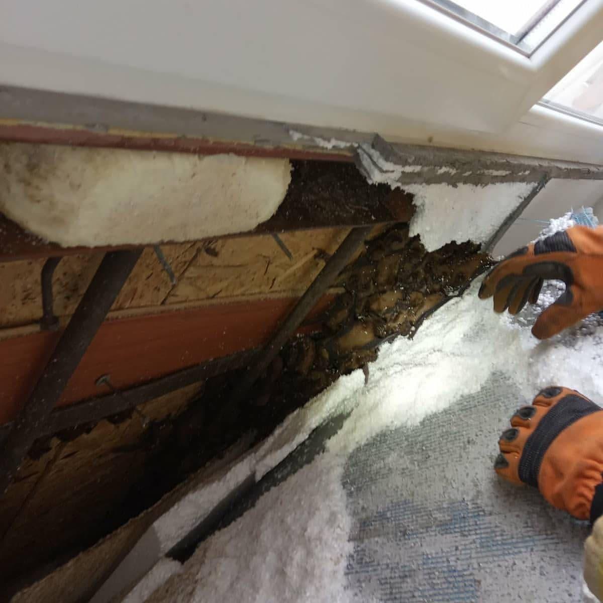 Жуть. На балконе жилого дома в Днепре обнаружили колонию летучих мышей - 500 штук (ФОТО, ВИДЕО) 5