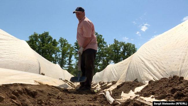 Это катастрофа, гибнет урожай: в Чехии бьют тревогу из-за украинских заробитчан