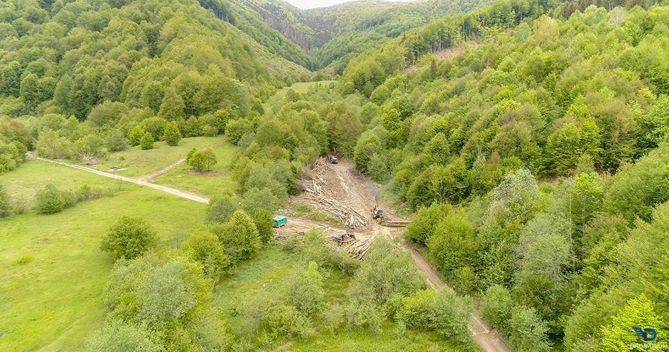 """""""Вбивають"""" майбутнє: мережу налякали світлини масштабної вирубки лісу в Карпатах. Фото"""